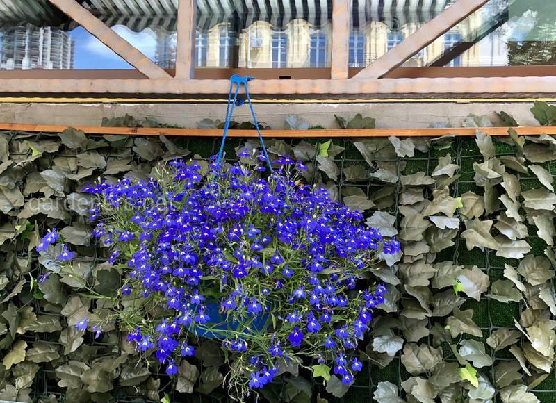 Як вдало поєднувати квіти в горщику?