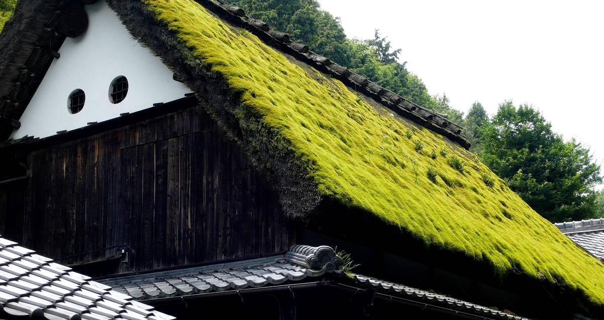 зеленая крыша скатного озеленения
