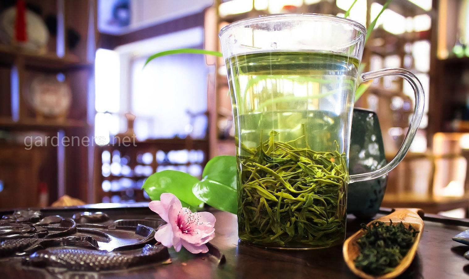 зеленый чай при похудении.jpg