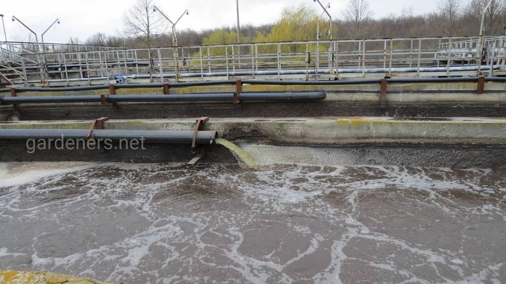 Використання суспензії хлорели з метою очищення промислово-забруднених вод