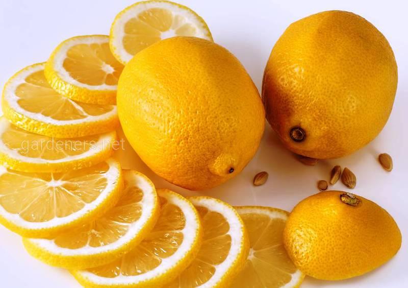 Противопоказано лимон