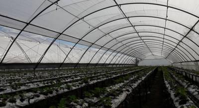 Туннели для ягодников, садов и овощей