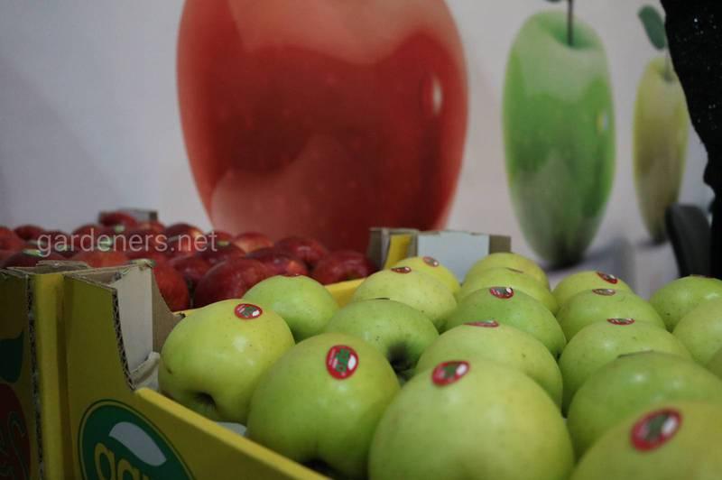 Сколько могут плодоносить фруктовые деревья? Стадии развития