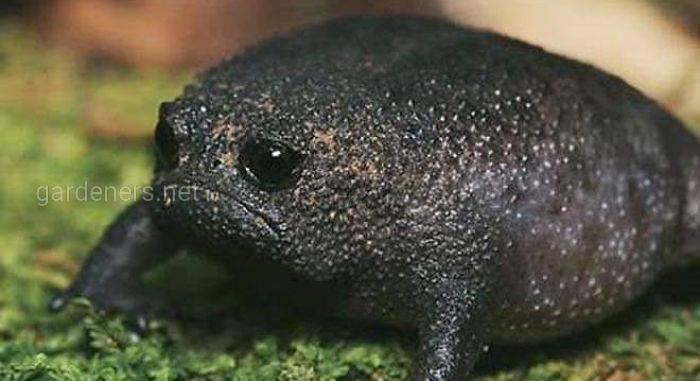 """Вітайте - жаба """"зленьке авокадо""""!"""