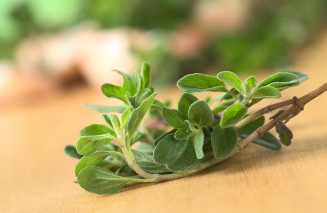 Майоран - растение, которое расслабит вас и облегчит головную боль