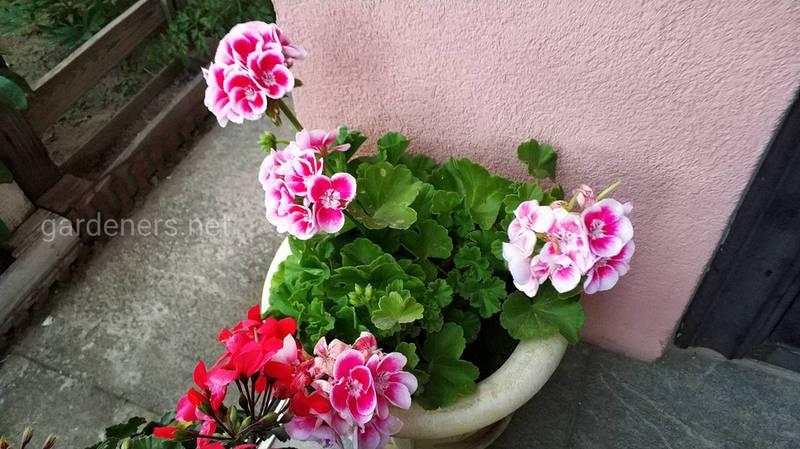 Как правильно подготовить комнатные растения и место для их зимовки?