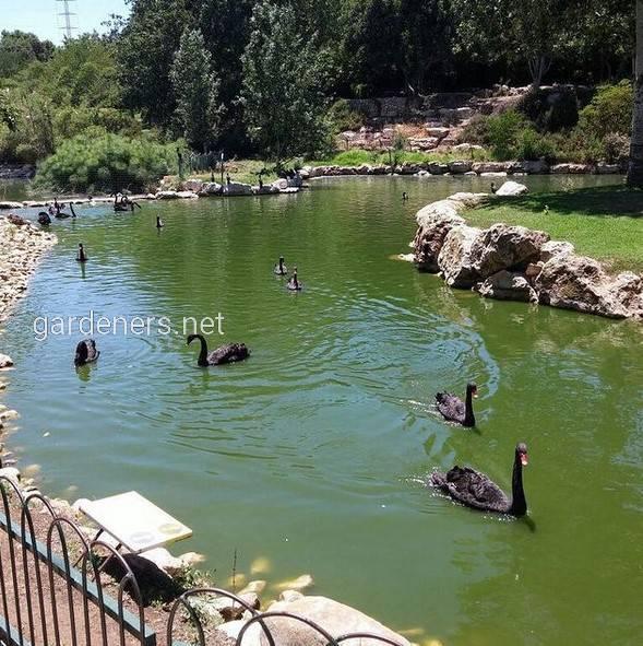 Иерусалимский зоопарк