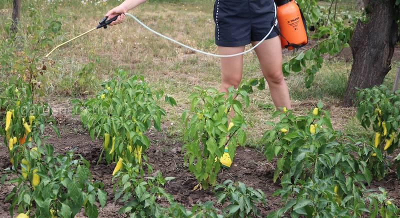 Віруси в овочівництві завдають великої шкоди: як цьому запобігти?