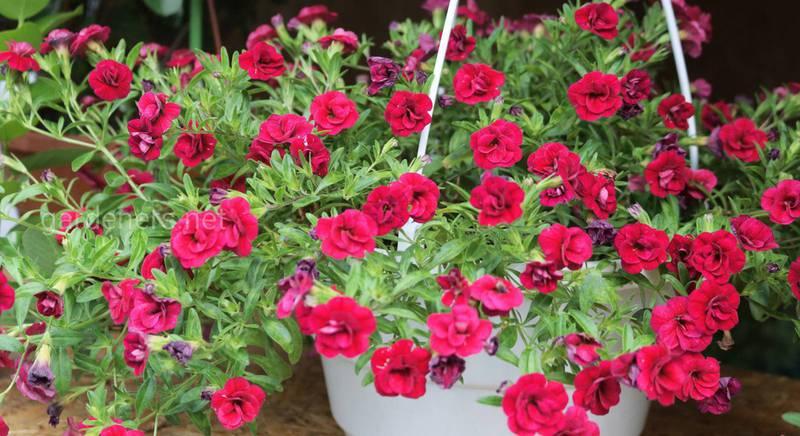 Какие цветы посадить в кашпо
