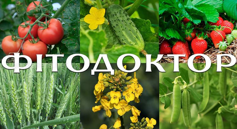 ENZIM ФитоДоктор Agro - Биологическийфунгицид - Обзор, цена, где купить