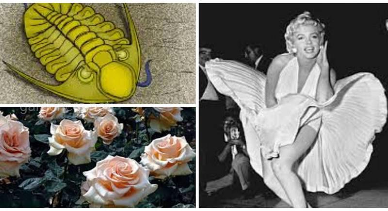 Мерилин Монро до сих пор вдохновляет не только деятелей искусства, но и ученых и садоводов!