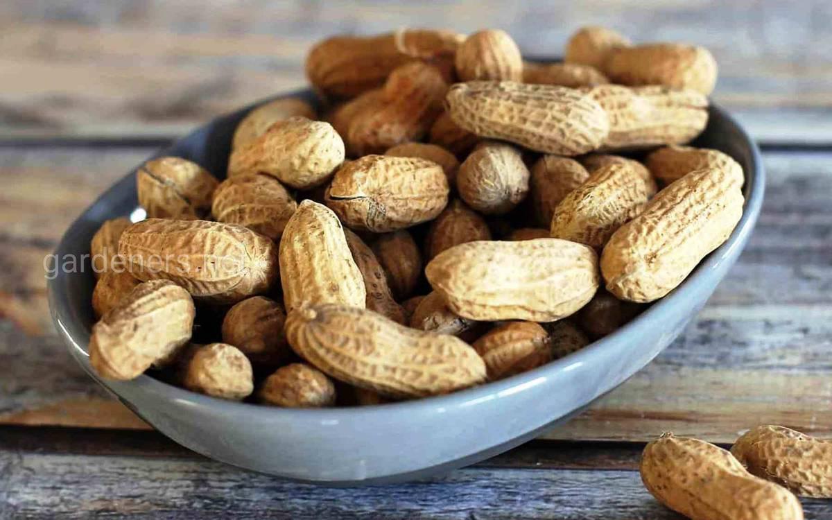 выращиваем арахис