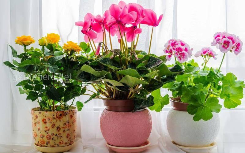 Комнатные цветы: какое окно лучше