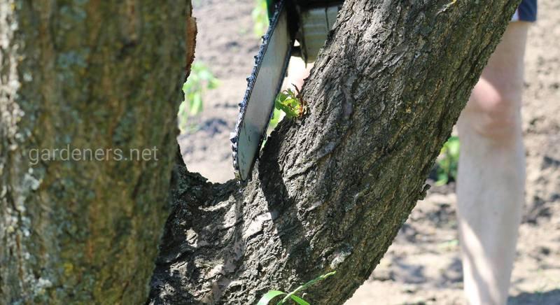 Когда и как правильно обрезать плодоносящие деревья