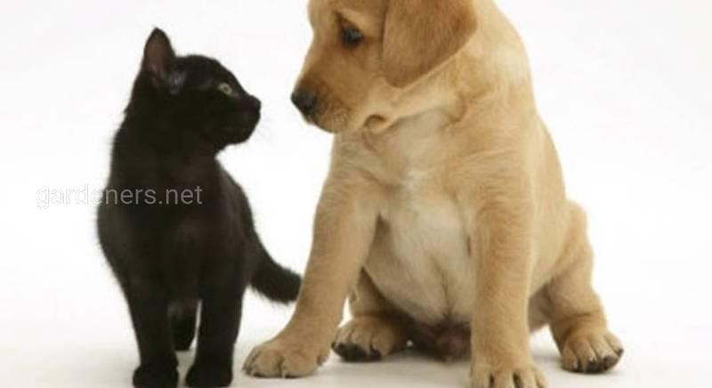 Кошки и собаки, история и факты.