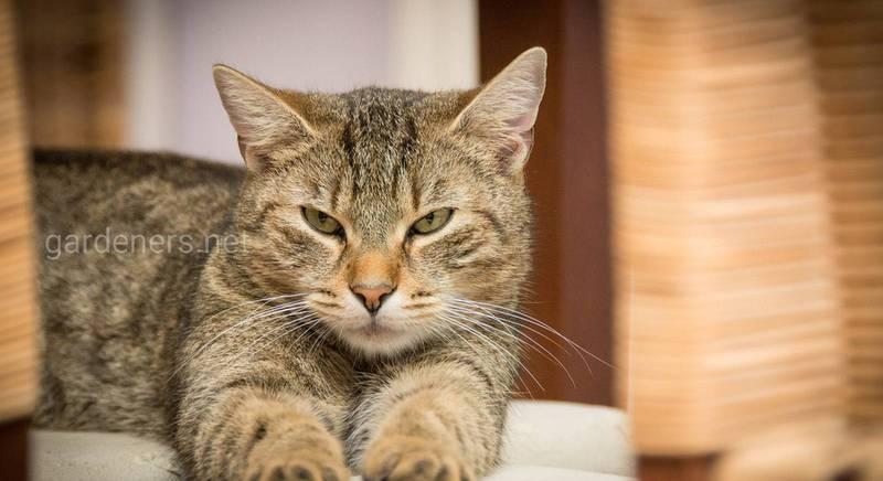 Вибираємо кота по знаку зодіаку