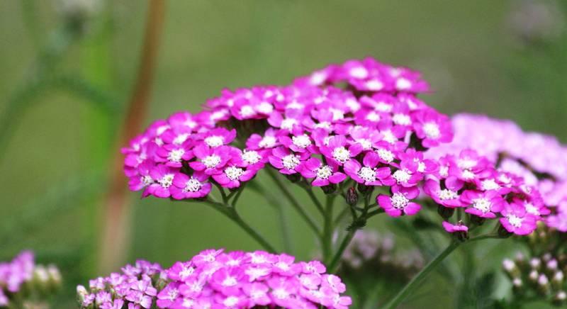 ТОП-10 рослин для бідних ґрунтів