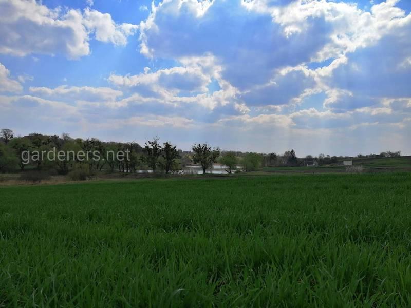Каких условий необходимо придерживаться для достижения хороших урожаев пшеницы?