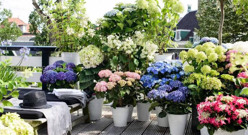 Контейнерний квітковий сад: як створити, переваги та недоліки
