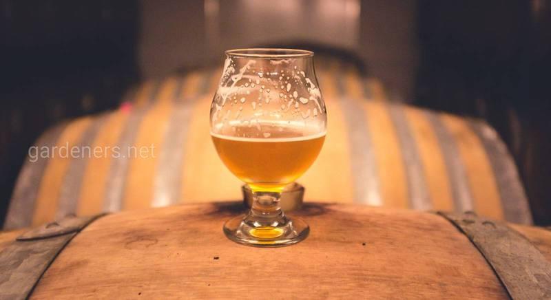 Секреты приготовления домашнего имбирного пива