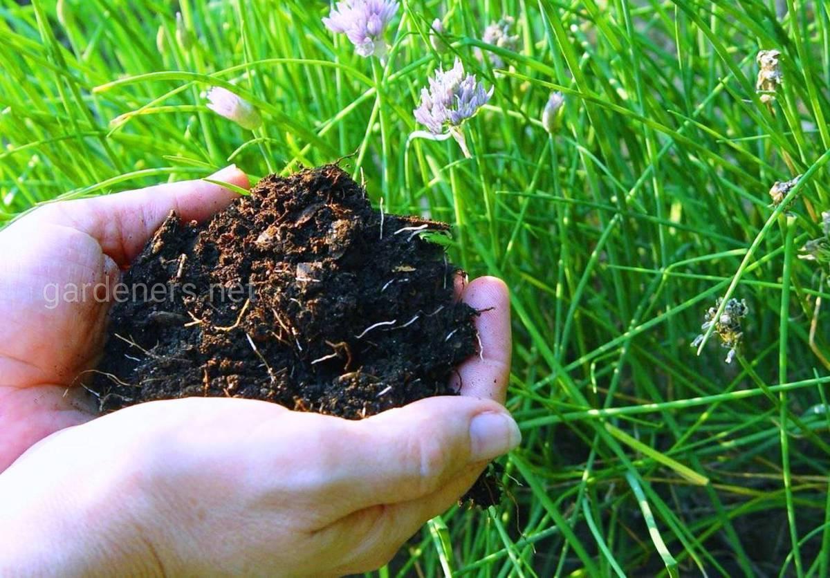 биогумус лучшее удобрение