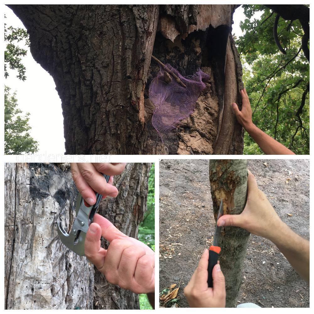 спасаем деревья