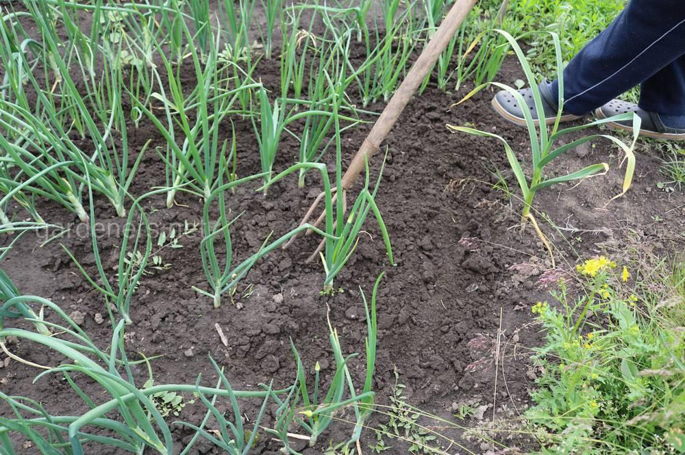 Избыточная влажность почвы