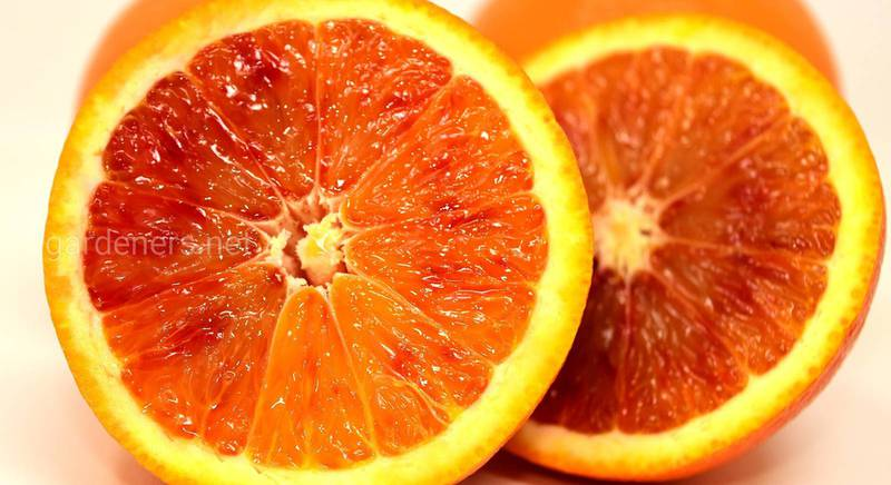 Все про апельсиновий лікер. Частина 2