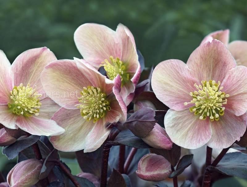 Які квіти можна посадити в жовтні?
