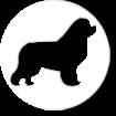DOG SHOW CLUB