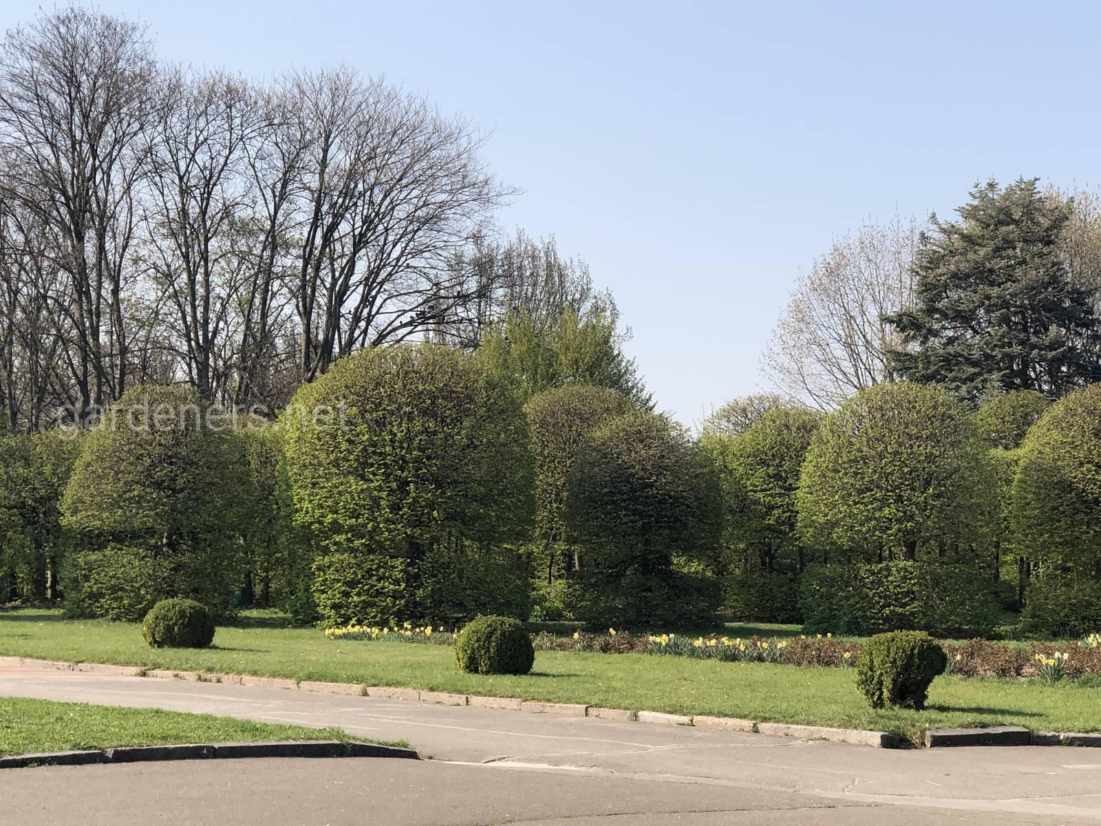 Ботанический сад им.Гришка