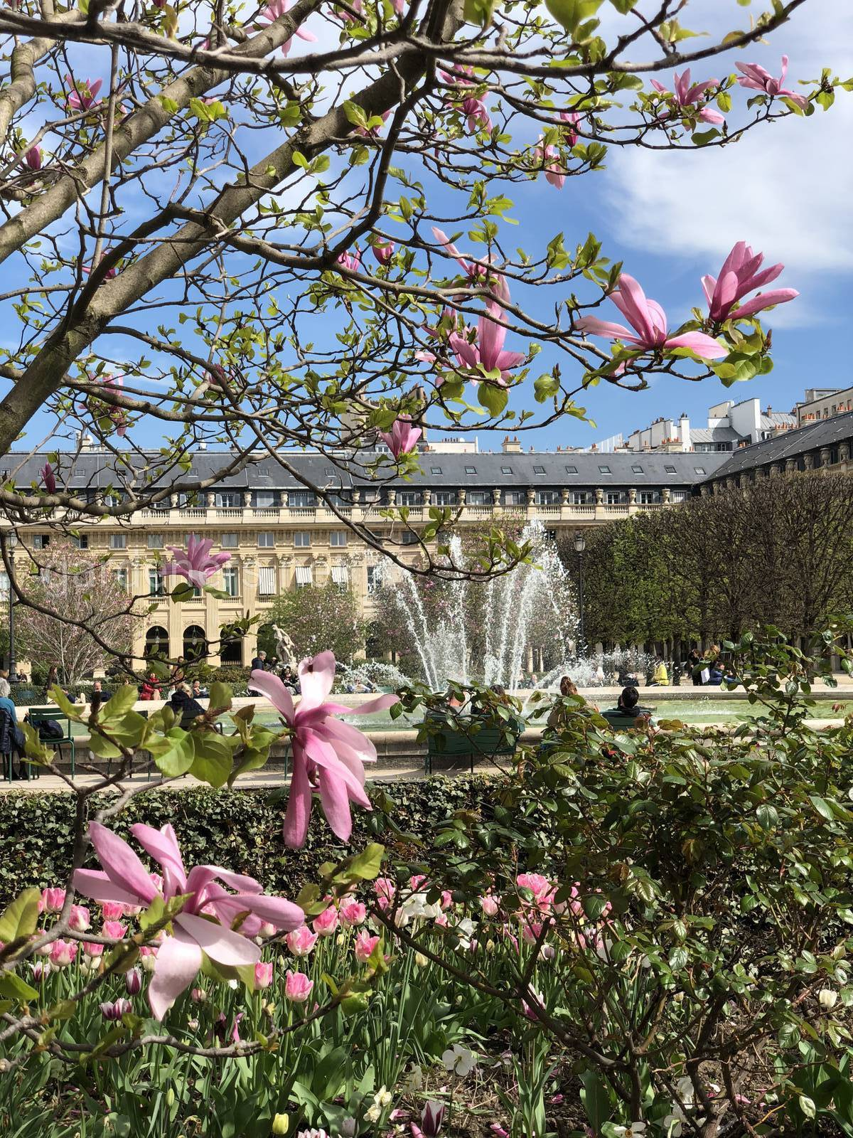 Магнолия в Париже
