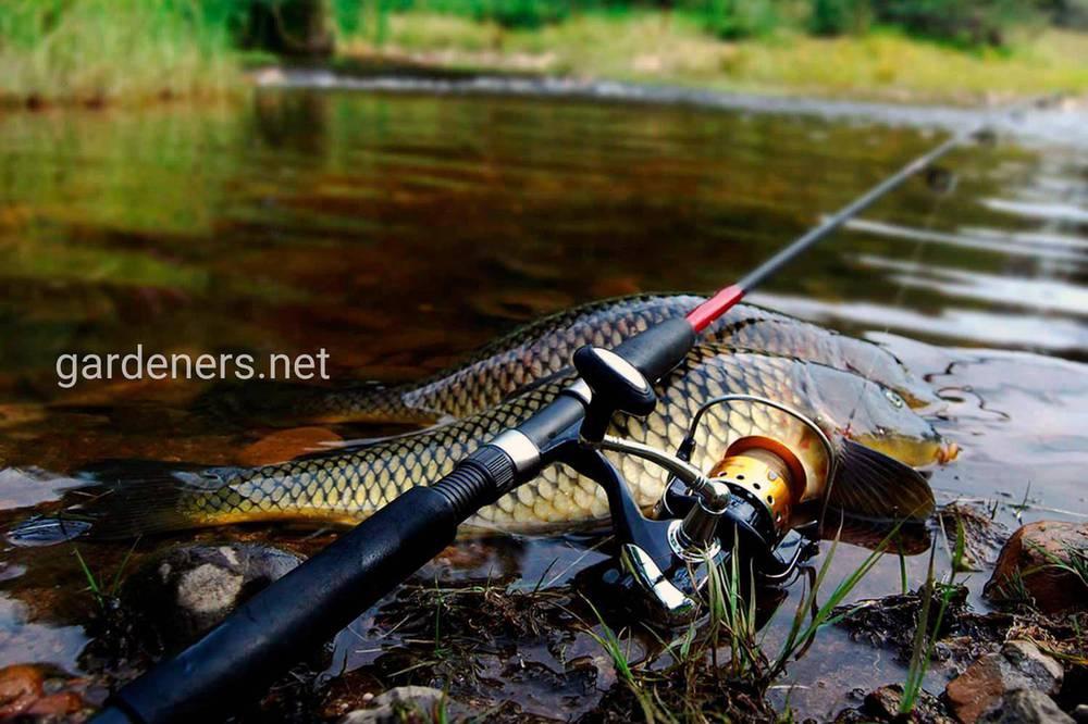 Как правильно ловить рыбу на поплавочную снасть