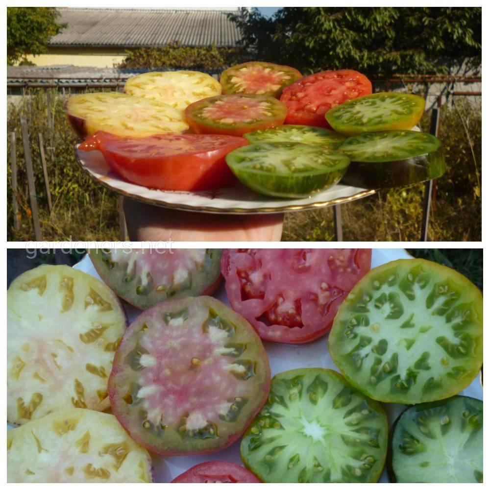 сорт томатов Бльшой белый блюз (2)