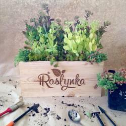 Коли треба зелено та зі смаком - Roslynka