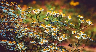полезный сад.jpg