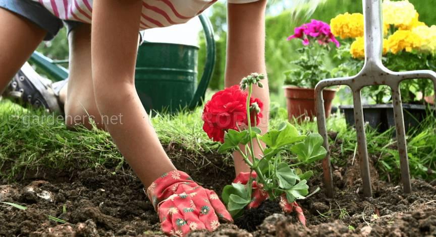 Разбиваем и пересаживаем цветник в мае.jpg