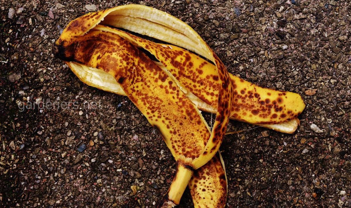 Свежая банановая кожура - удобрение