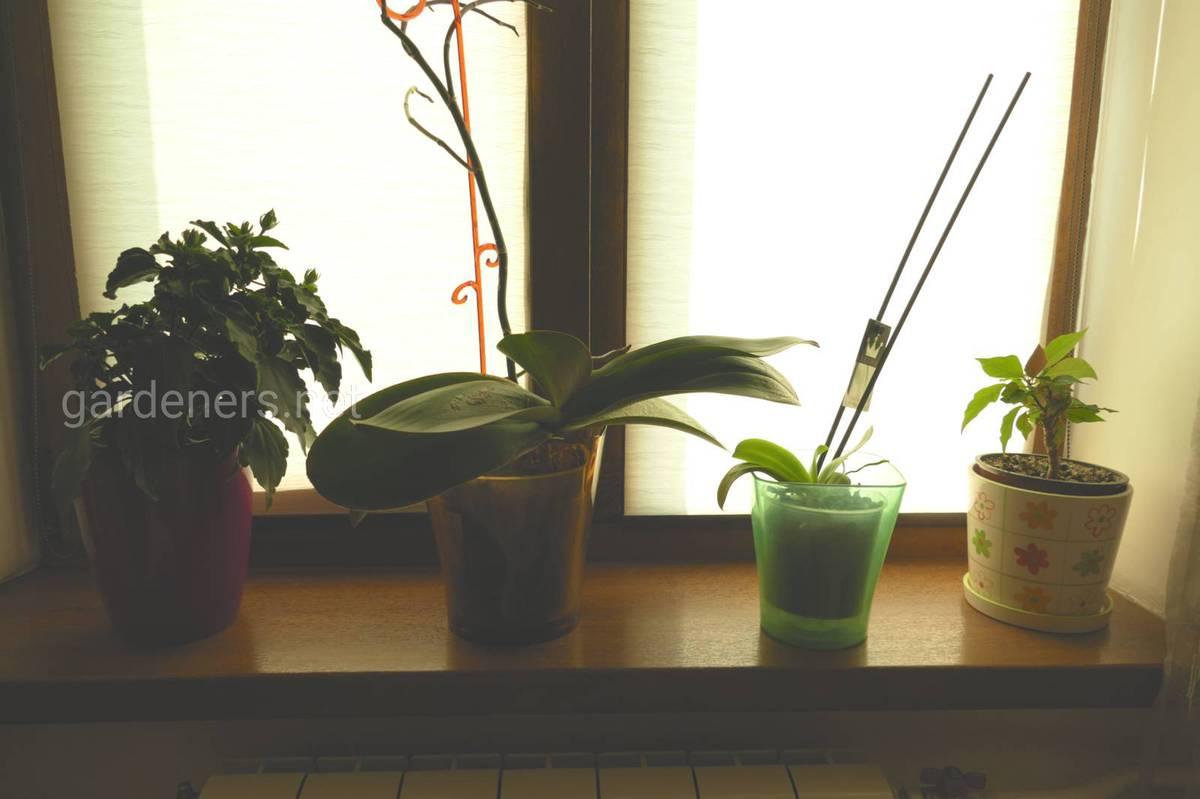 роллеты для комнатных цветов