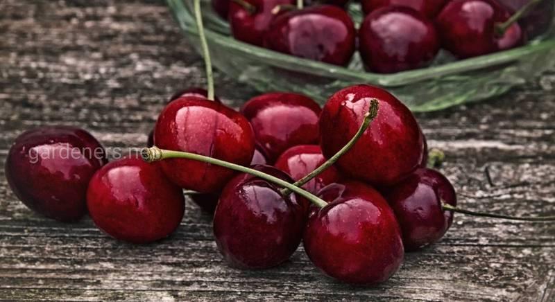 Как приготовить вишневую настойку: рецепты
