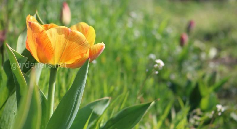 Квітучий сад