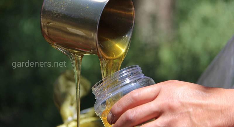 Про користь коріандрового меду