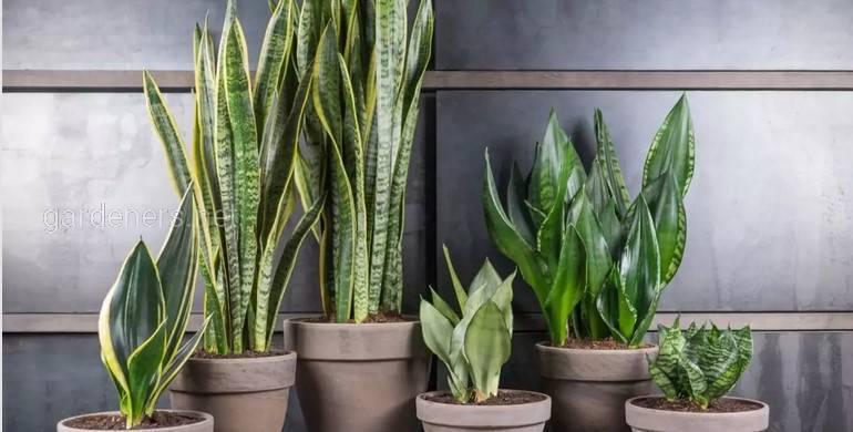 Як доглядати за кімнатними рослинами взимку?