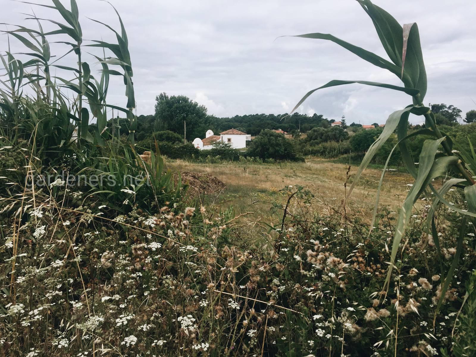 Ферма в Португалии