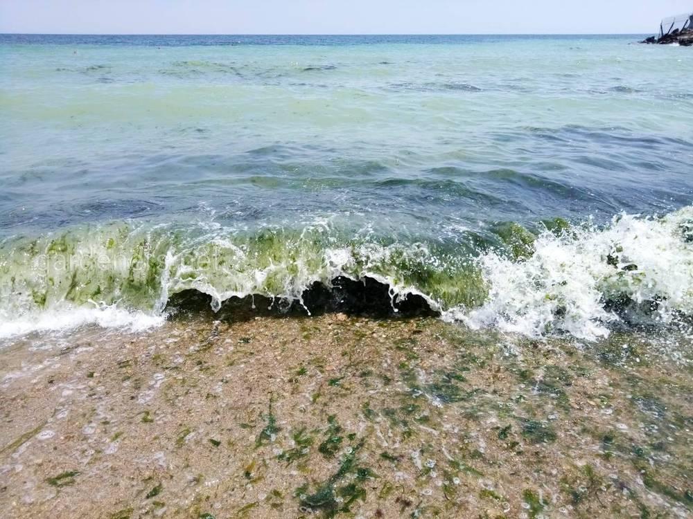 біологічне забруднення вод природних водоймищ
