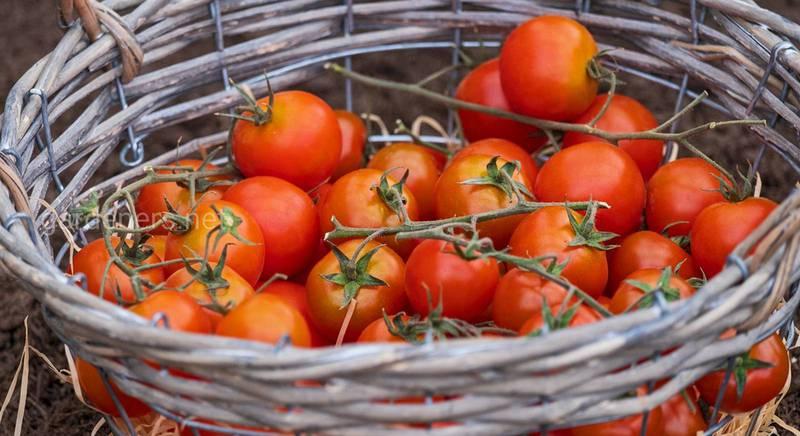 Найневдаліші сорти овочів: робота над помилками