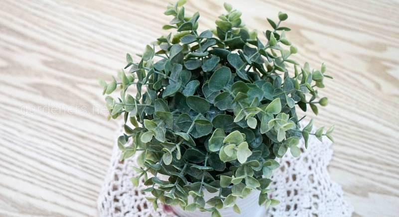 Вирощування кімнатних рослин