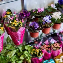 Квіти на Бірюзова