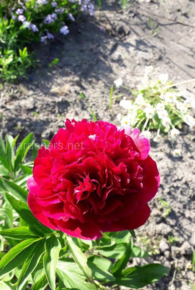 Красная красота