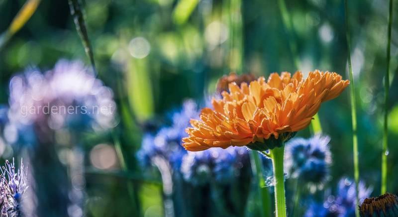 Правильная подкормка цветника разными удобрениями